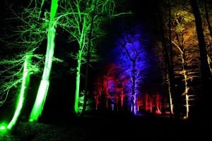 Waldlichter Wildwald 2012