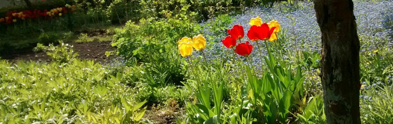 Blumen_Rheda-Wiedenbrueck